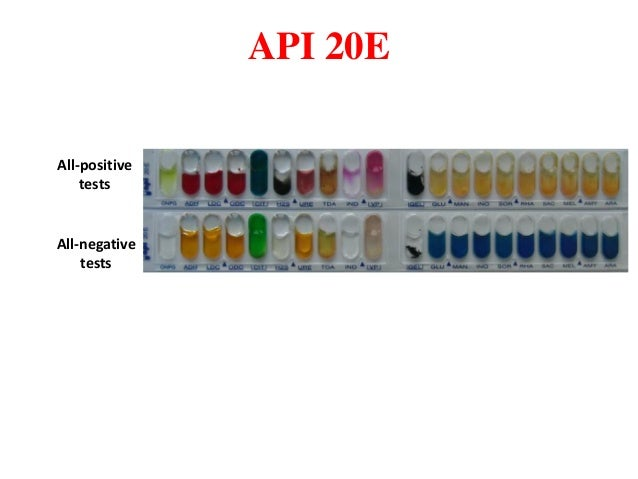 what is found in the api 20e profile index manual